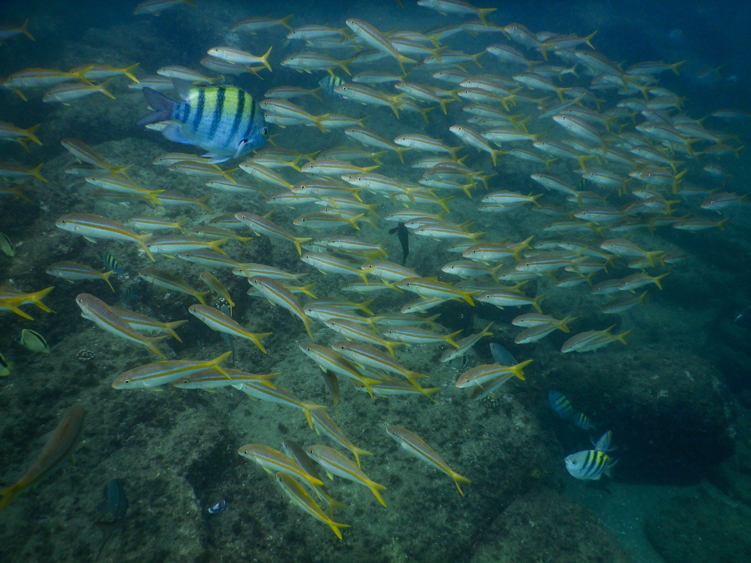 Snorkel tour Cabo San Lucas