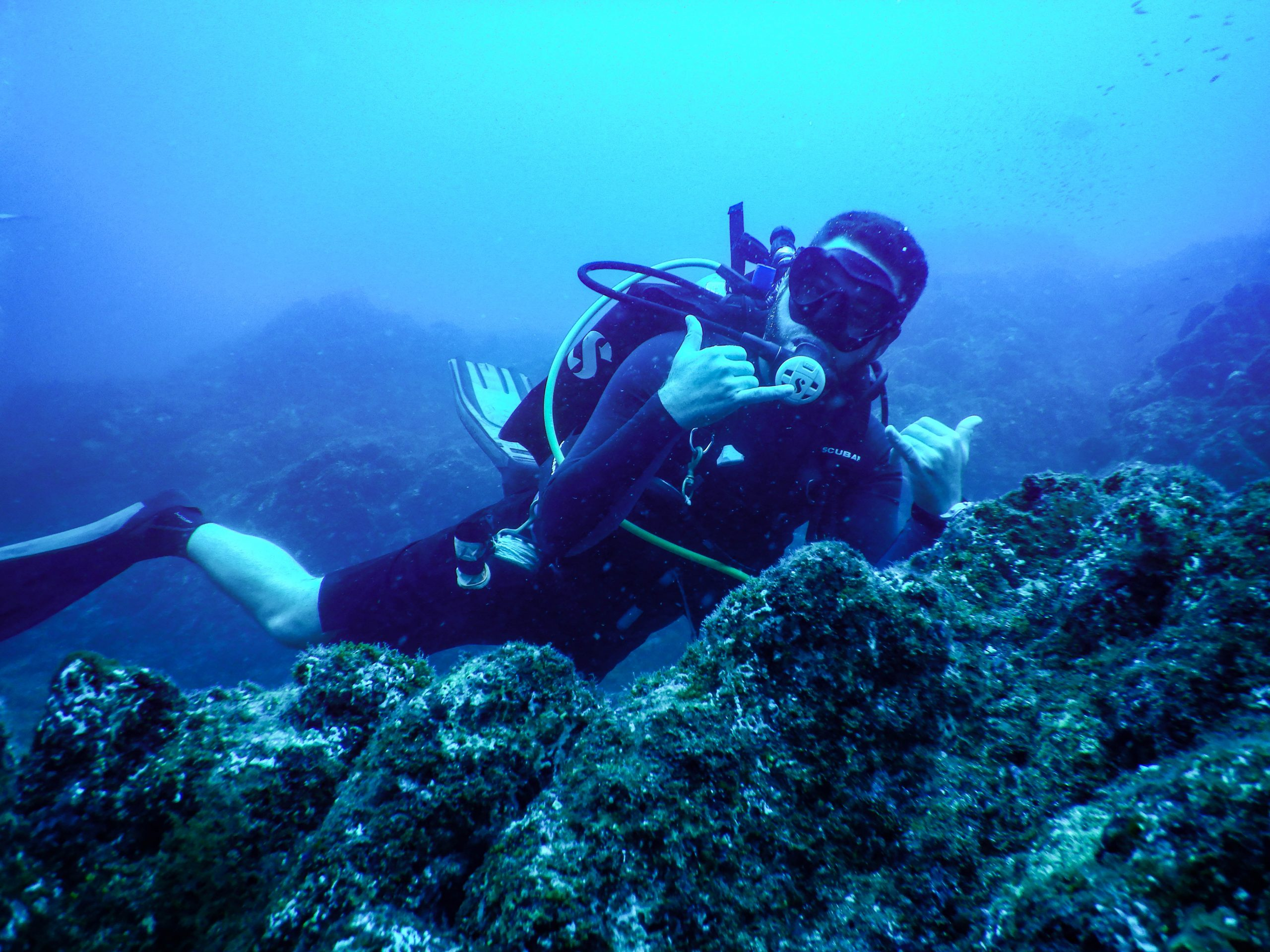 Dive with the Giant Mantas