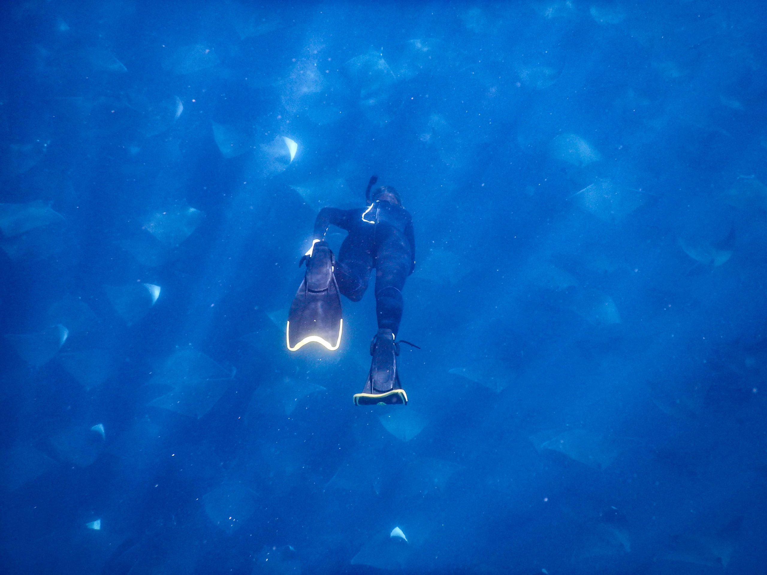 Into the blue mobula migration