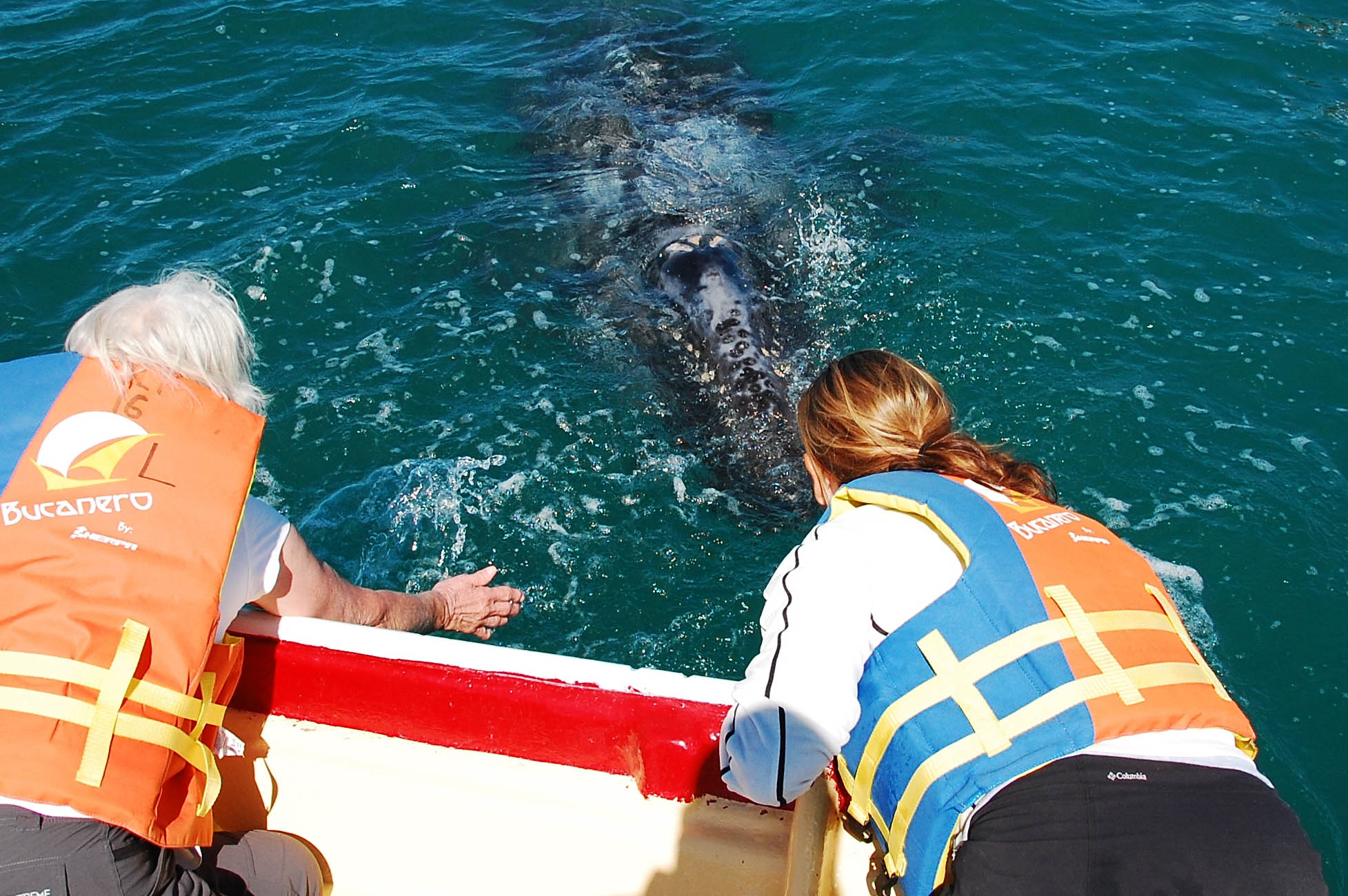 Grey whale watching tour