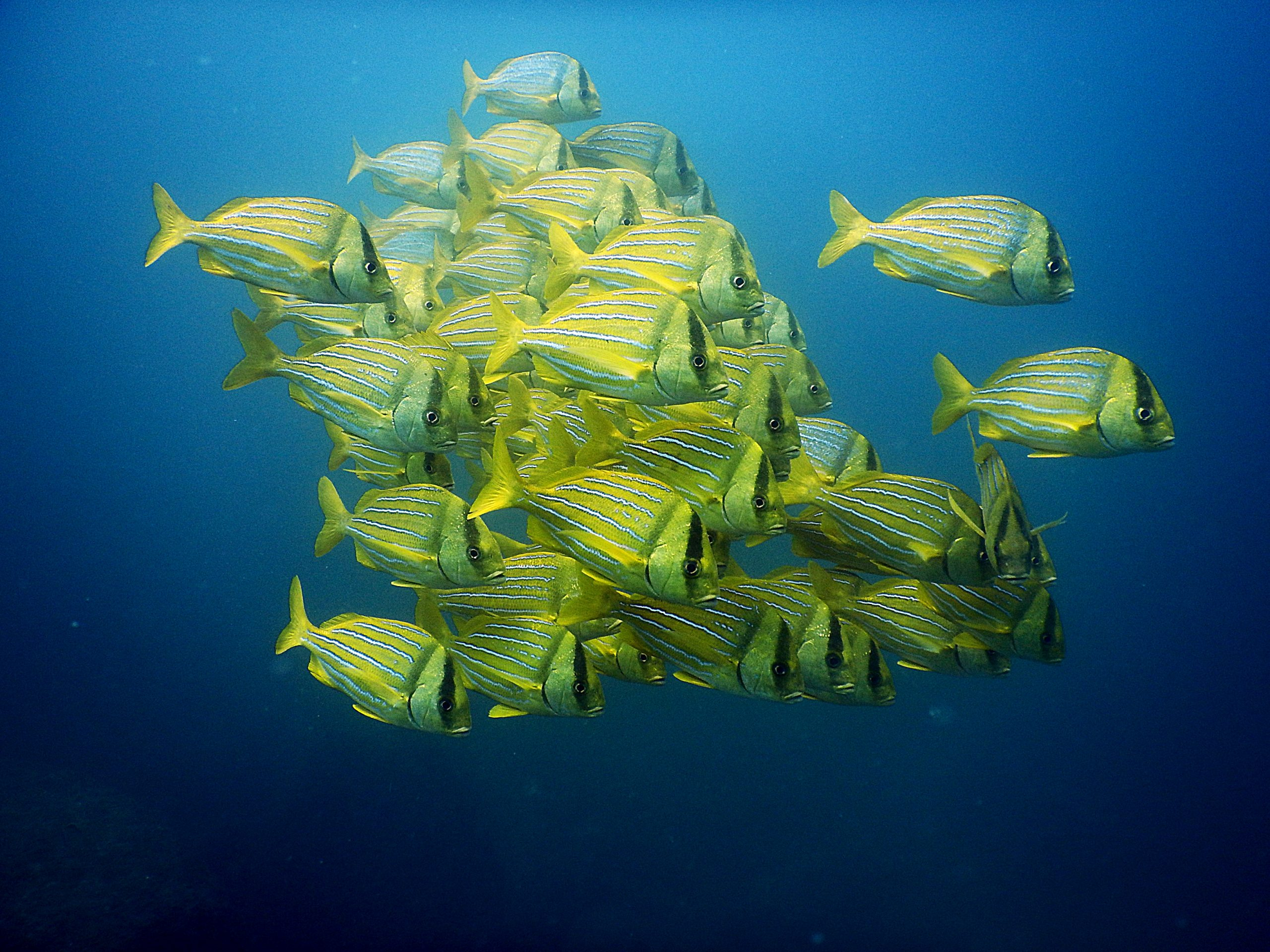 Dive Cabo Pulmo National Marine Park