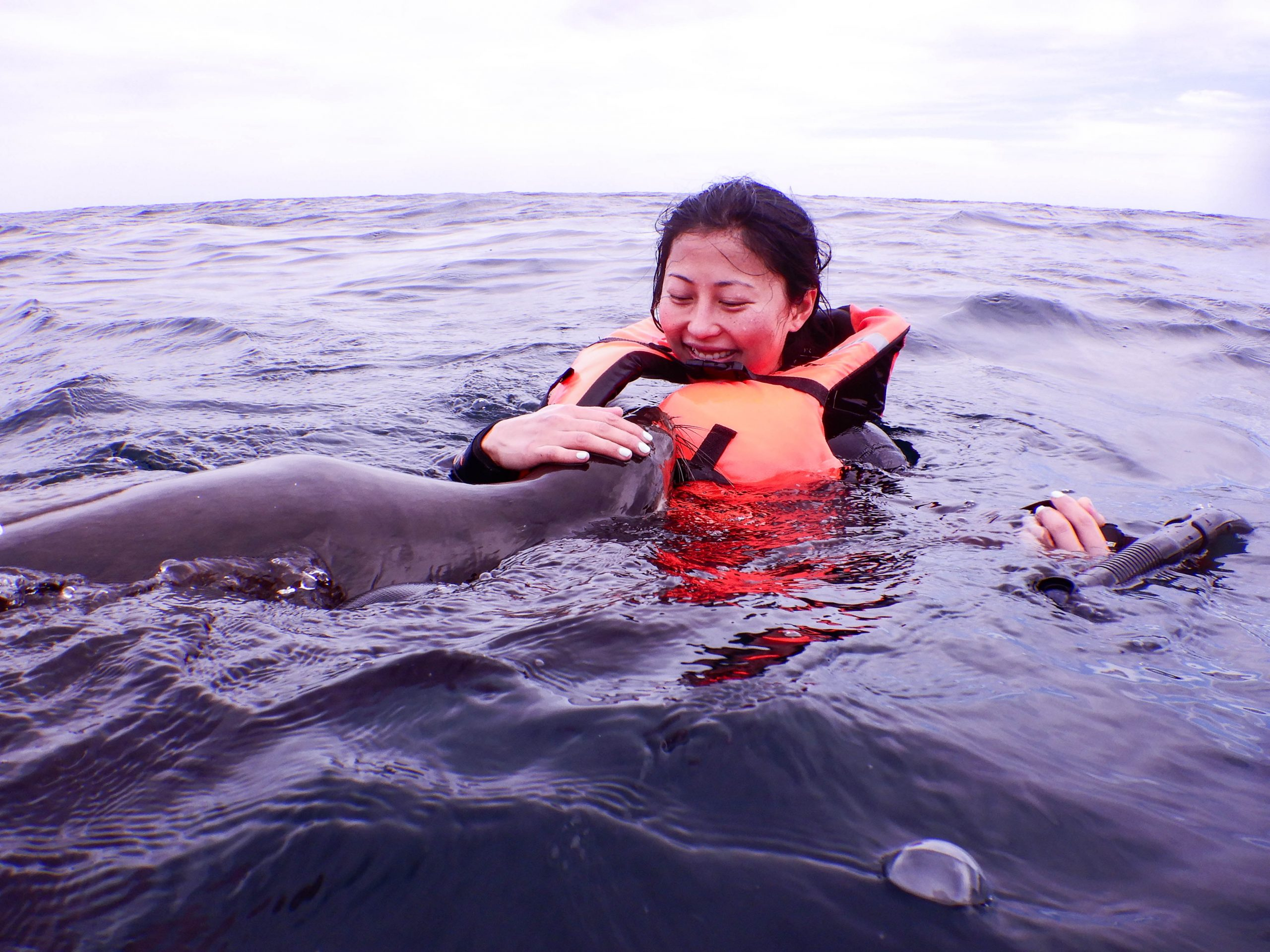 whale shark and sea lion snorkel
